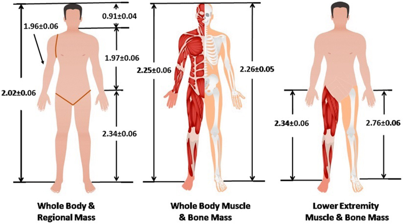 Scaling of adult human bone and skeletal muscle mass to height in the US population